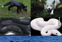 black&white animals
