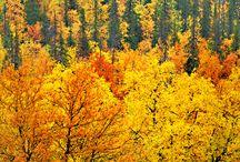 4 roční doby - podzim