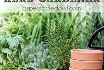 Herb gardening (ziołowy ogród)