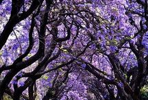 Beautiful Joburg /