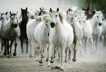 Horses / by Cindy Archer-Powell