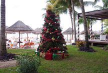 Holidays in Paradise / This festive season, regardless of which AMResort you choose to visit on your Unlimited Vacation Club getaway you can be sure that your Christmas will be bigger and better than ever!