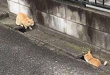 niedlichen Katzen
