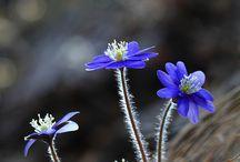 Blomster, sommerfugle