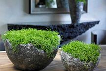 planten arrangement