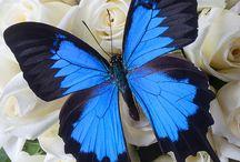 Насекомые, бабочки