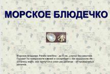 ракушки черного моря