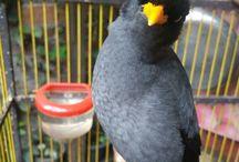 bird bimo
