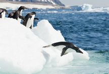 Antarctica Travel / A collection of articles, trips and advice for travelling to Antarctica. Icebergs, penguins, water.....aaaah.