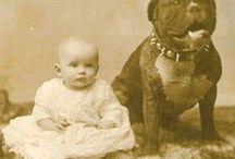 animaux nounous . / Babysitting: chiens