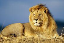 Animals / Animals - Greatest Creature of God