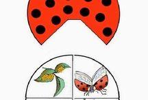 VV- vývoj hmyzu,živočichů - obrázky