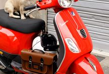 Pets on Vespa / Dogs, cats, and other pets on Vespa scooters