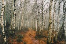 Birch / by WhiskeyMe