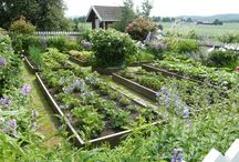 Vegetable Garden / by Kalanikapua Padeken Mortensen