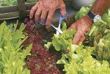 супер идеи для оформления огорода