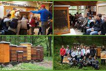 SP 4 Racibórz Akademie Przyjaciół Pszczół