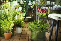 Zelenina na balkóne
