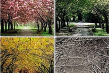 Spring-Summer-Fall-Winter / by Cathy Newberry Horne