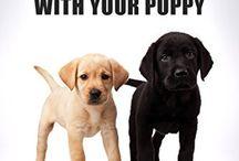 Puppy tips