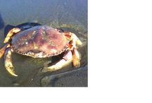 Oregon Beach Activities / Things to do on the Oregon coast