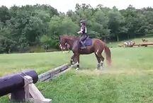 horse giffy