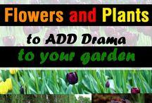 blomster til ny hage