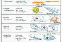 CIENCIA - BIOLOXÍA
