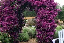 My (future) garden :)