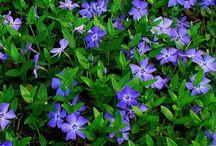 Bloemen mrt-april-mei-juni