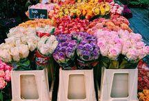 Market Flowers | Fleurs