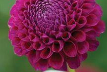 flowers  like