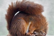 Squirrels, photos & prints & stuff / by Anna Tuomisalo
