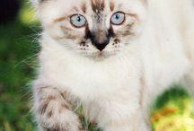 Αξιολάτρευτα γατάκια