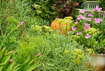 escuela de jardín / Temas básicos de jardinería