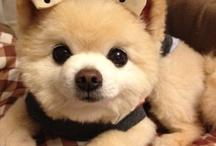 something cutesy