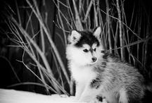 pups / by Sarah Watt