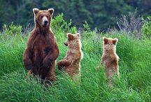 Wonderful world of bears... / by Julie Ayers