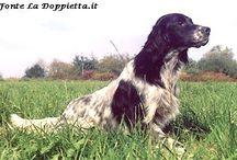 Immagini di cani