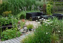garden / by Jo Thornber