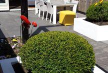 Tuin / Onze tuin