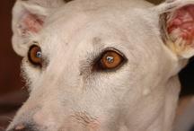 Dogs / by Maravi Gallifa Irujo