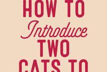 cat information