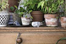szobanövények inspiráció