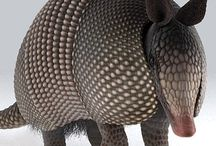 pangolines and armadillos