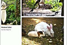 Flaura & Fauna