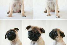 I Want A PUPPY / by Gail Follett