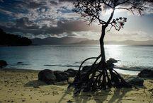 Kylie-anne Schmidt Photography / Landscape, Mangrove, Ocean, Sea, Tropics, Cairns, Sunrise, Sunset, Island