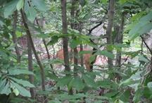 Deer Roaming Through The Park