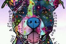 pitbulls / by Jasmine Carter